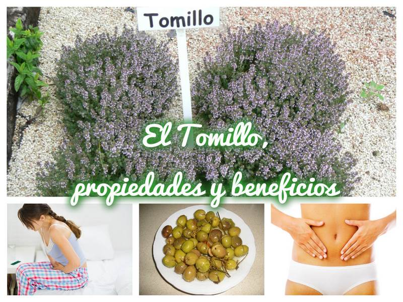 Collage_Tomillo